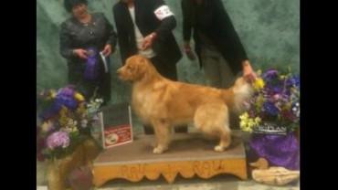 Best of Winners BLU in USA EDISON 2012