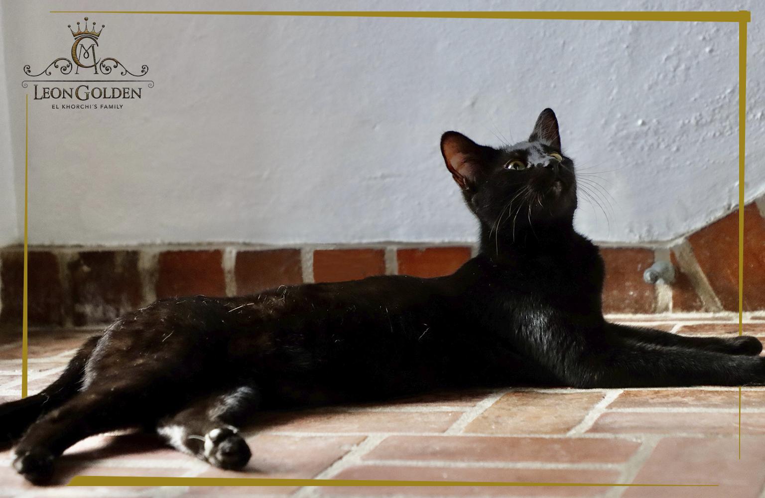 F2 black Mamba